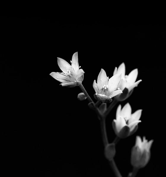 succulent flowers-7766.jpg
