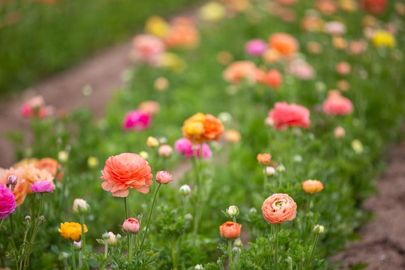Spring Flowers B-295.jpg