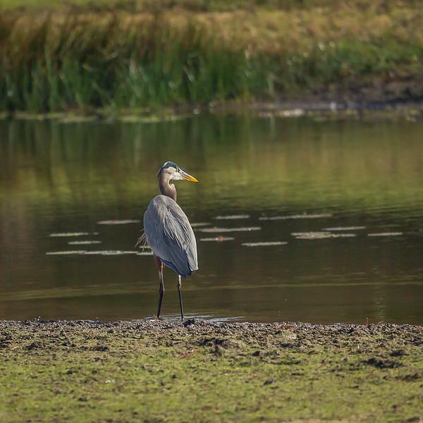 Birds of Burroughs Park  11-2020