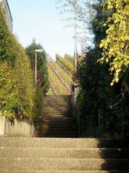November Vines -- Weinstadt
