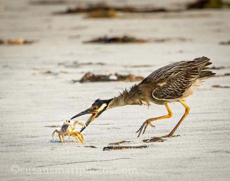 Heron vs Crab