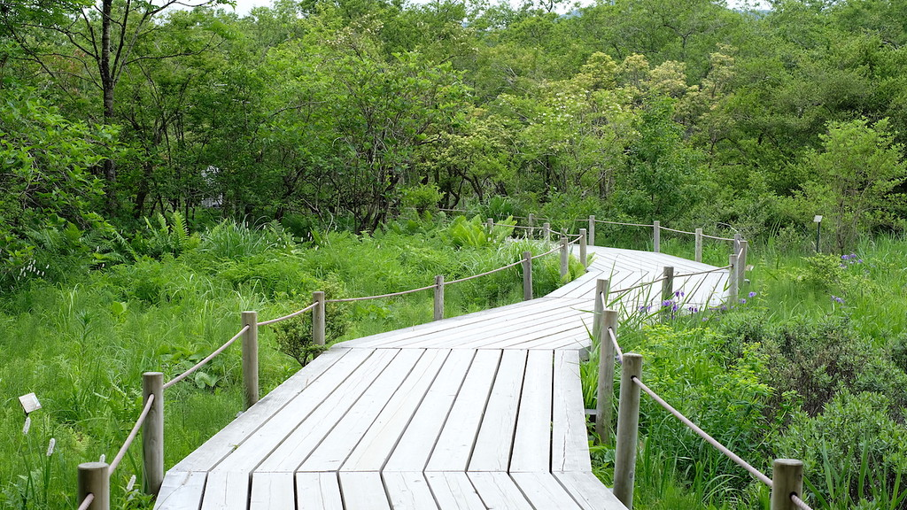 A path through the marshlands at the botanical gardens of wetlands.