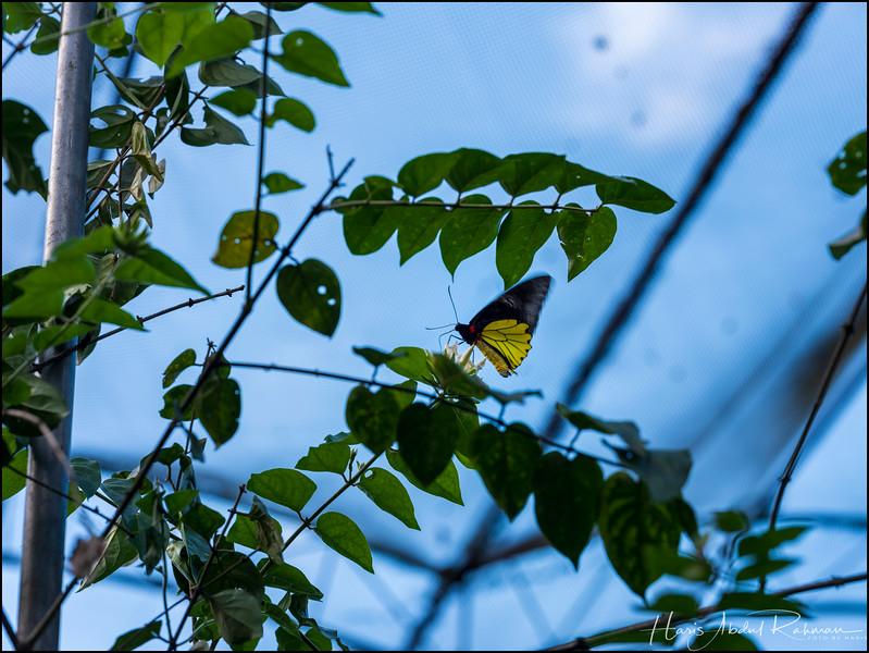 200104 KL Butterfly Park 22.jpg