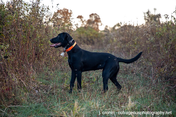 Bird Dog - October 2020