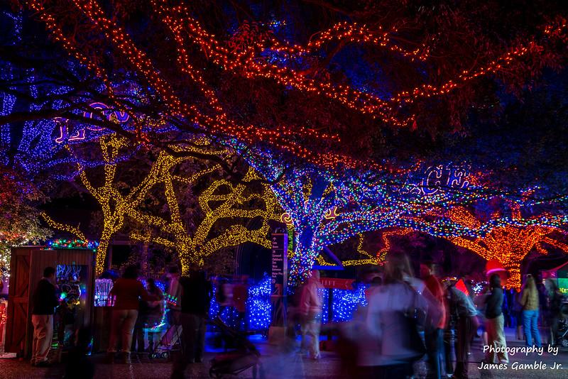 Houston-Zoo-Lights-3011.jpg