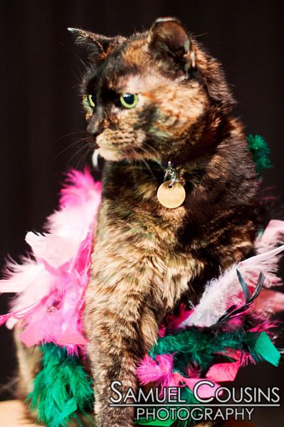 Natalie, the St Lawrence's house cat, all dressed up.
