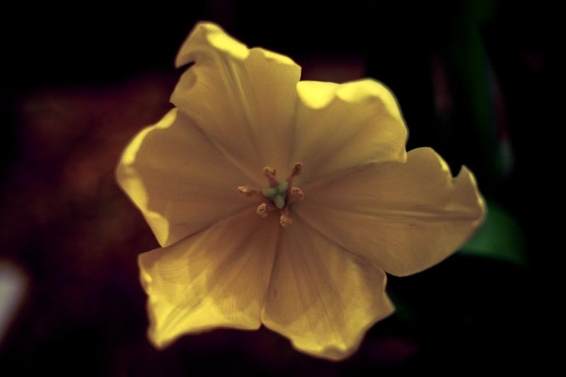 Flower_fullsize.png