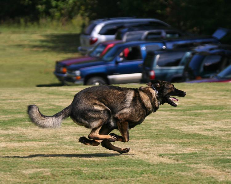 BJ Spanos Super Schutzhund-117-Edit-Edit.jpg