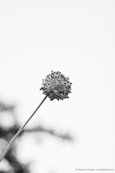 #270 - Autumn Rises