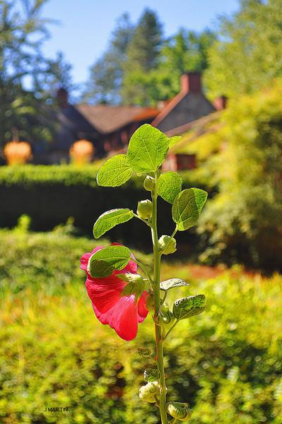 cottage garden 9-23-2009.jpg
