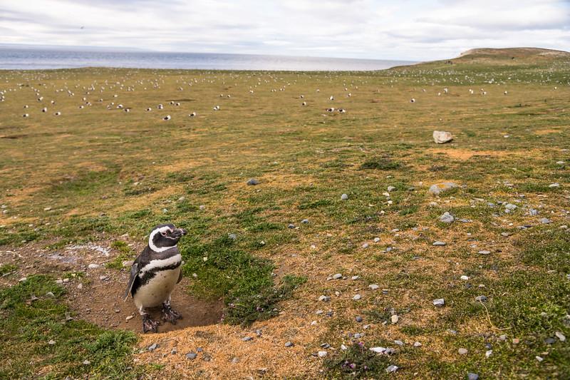 Patagonia-13.jpg