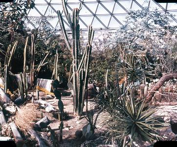 Bloedel Conservatory, Desert Scene