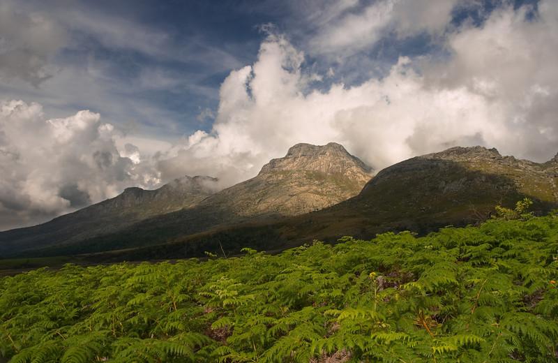 Mulanje - Mulanje Mountain - 3523.jpg