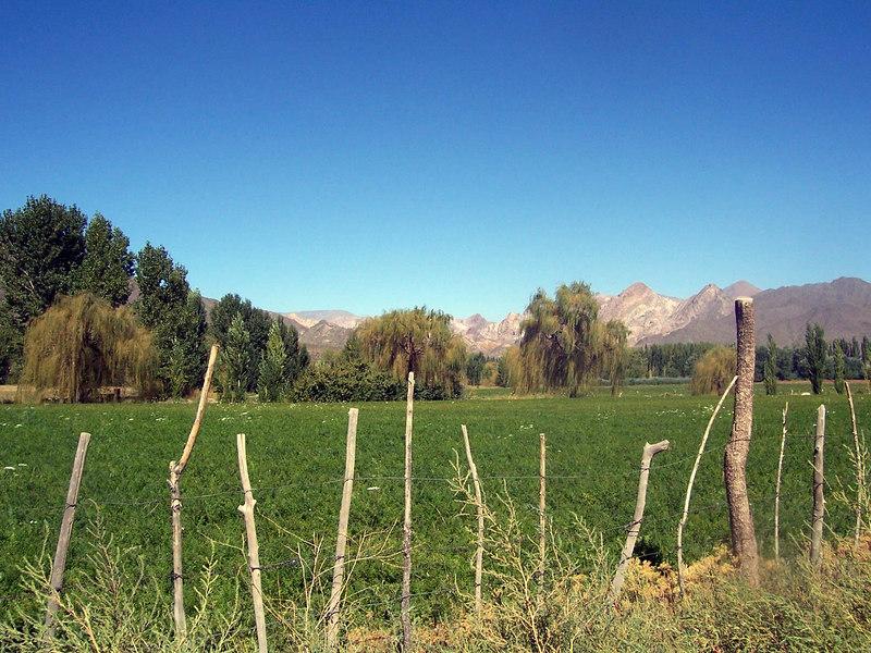 A field on the edge of Uspallata.