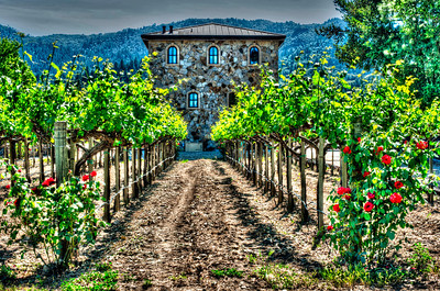 Anomaly Vineyard and house