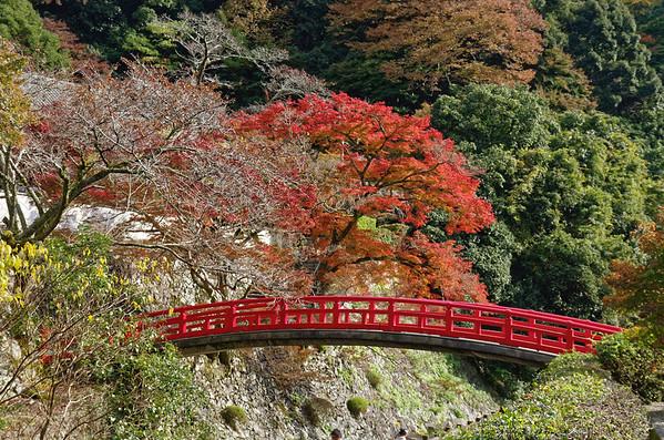 Autumn Color in Osaka
