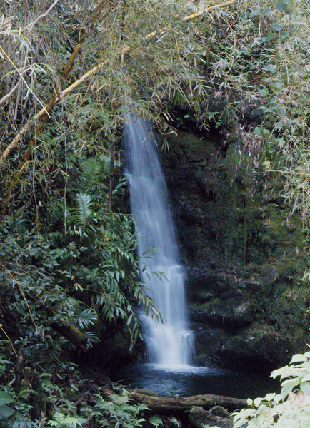 105- 20080409- Hawaii 15- Enroute to Hilo- Off-road Waterfalls DSC_2608.jpg