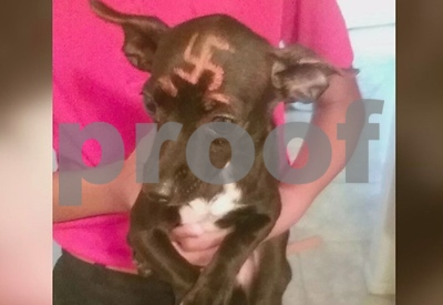 dog-with-swastika-painted-on-its-head-shows-up-on-neighbors-doorstep