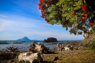 Whakatane Landscapes