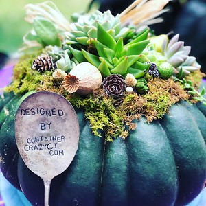 2020 Succulent Topped Pumpkins