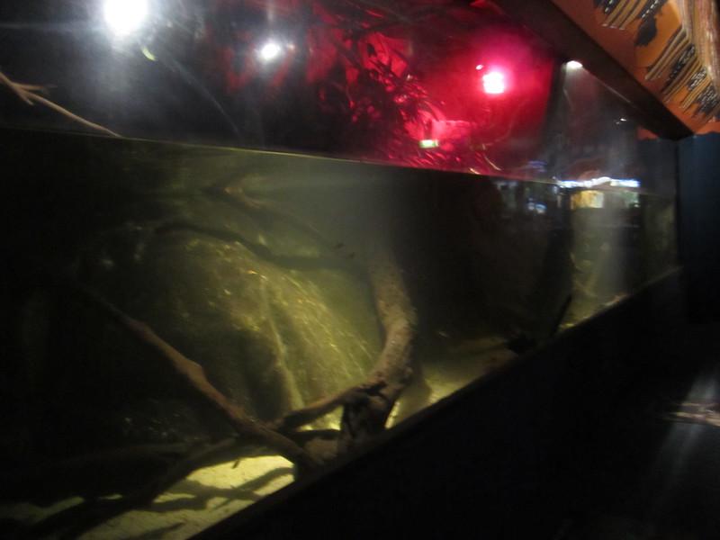 Sydney - Sydney Aquarium-3.JPG