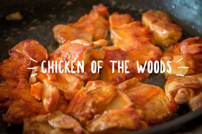 Chicken Of Woods