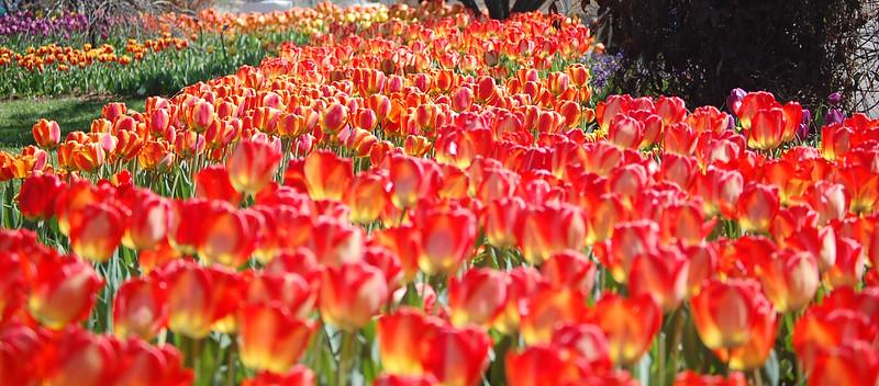 zoo blooms.JPG