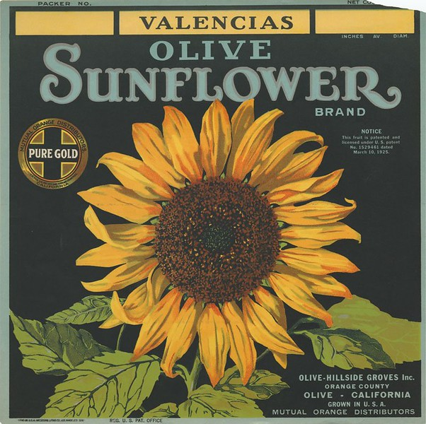 1925-Olive-SunflowerBrandValenciaOranges-OliveHillsideGrovesInc.jpg