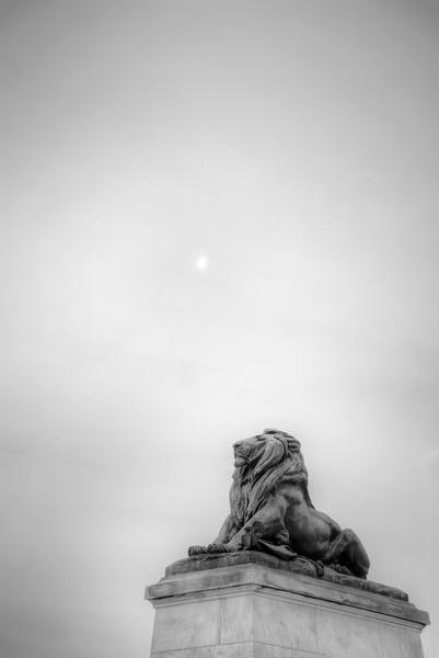 lion-dc.jpg