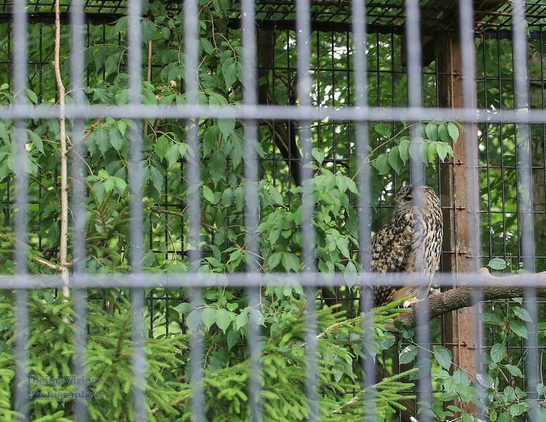 2016-07-17 Fort Wayne Zoo 709LR.jpg