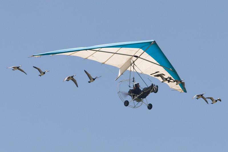Christian Moullec, delta-vlieger met ganzen.