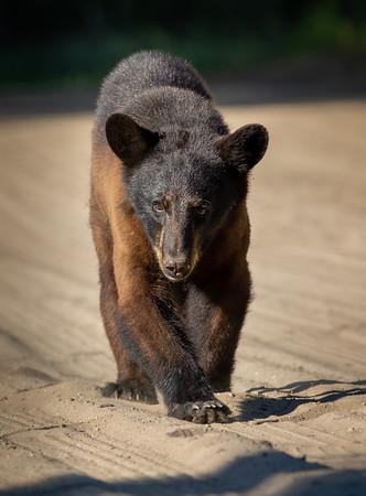 Eastern North Carolina Bears 2019