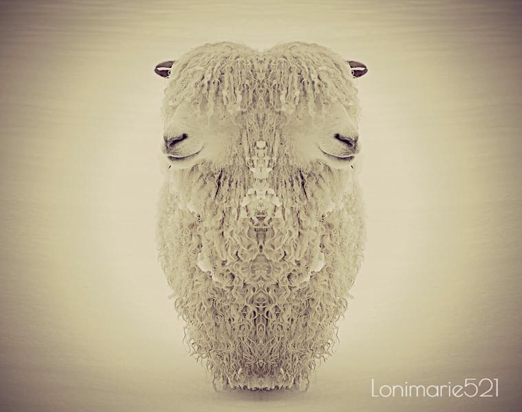 sheep abstract 17.jpg