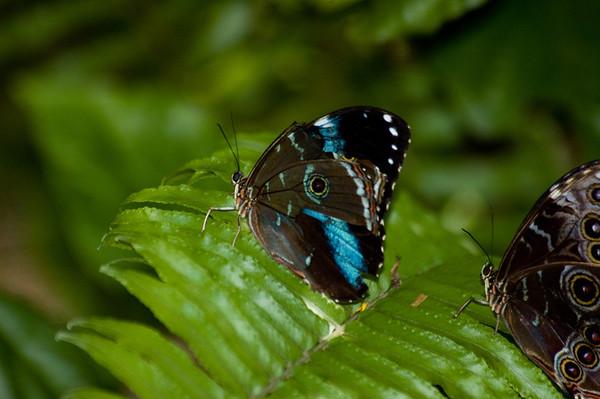 2006 - Butterfly World, November