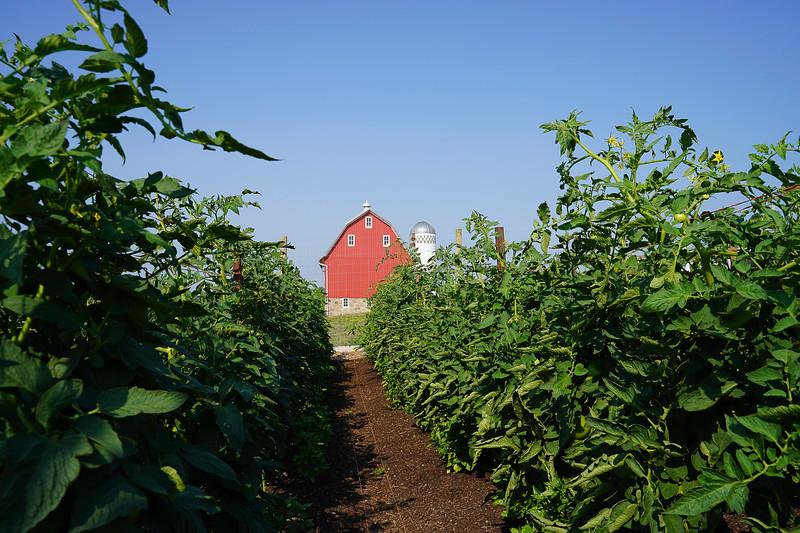 Arboretum Farm 8-19-26.JPG