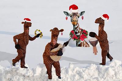 giraffe xmas card