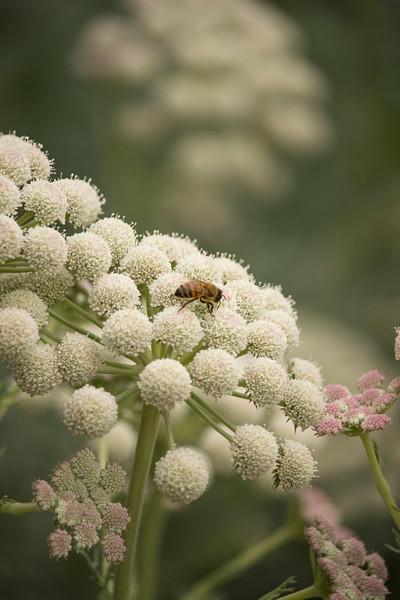 KoRedfield-Floral14.jpg