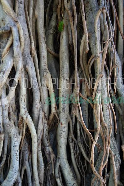 Banyan Roots_batch_batch.jpg