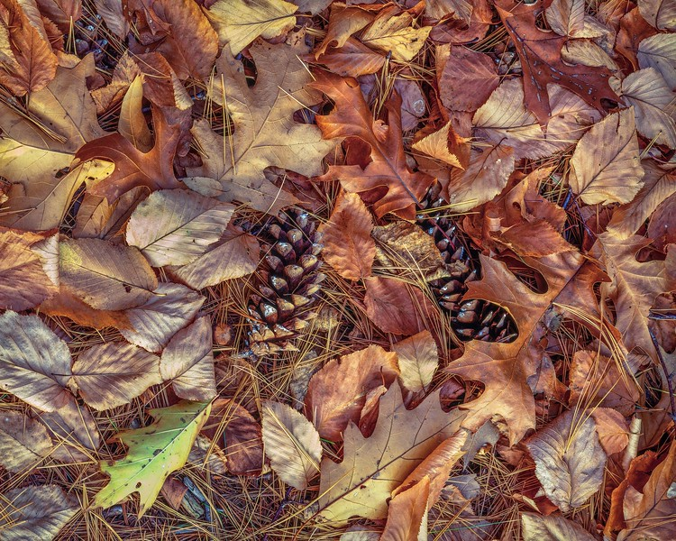 OAK LEAVES AND PINE CONES + L o shrp-F2.jpg