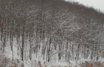 22524 State scenes Laurel Run, Coopers Rock, Campus snow