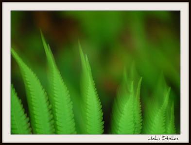 Feathery Ferns