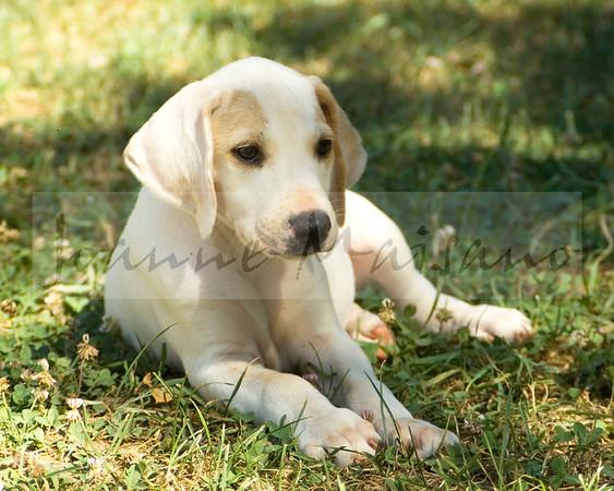 BRH Pups/Hounds 6-27-17