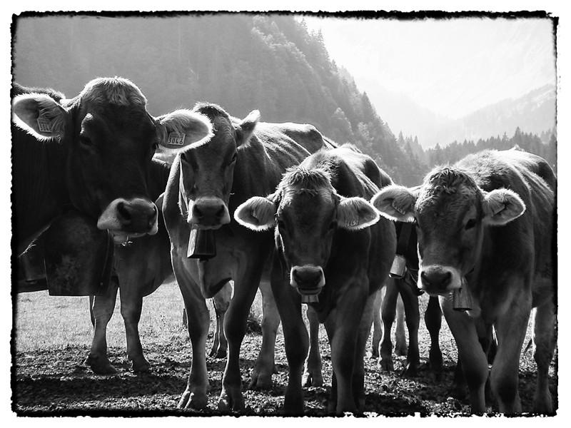 Gruppe Glarus.jpg