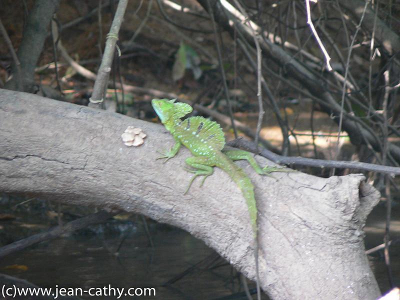 Costa Rica 2007_ (58 of 85)