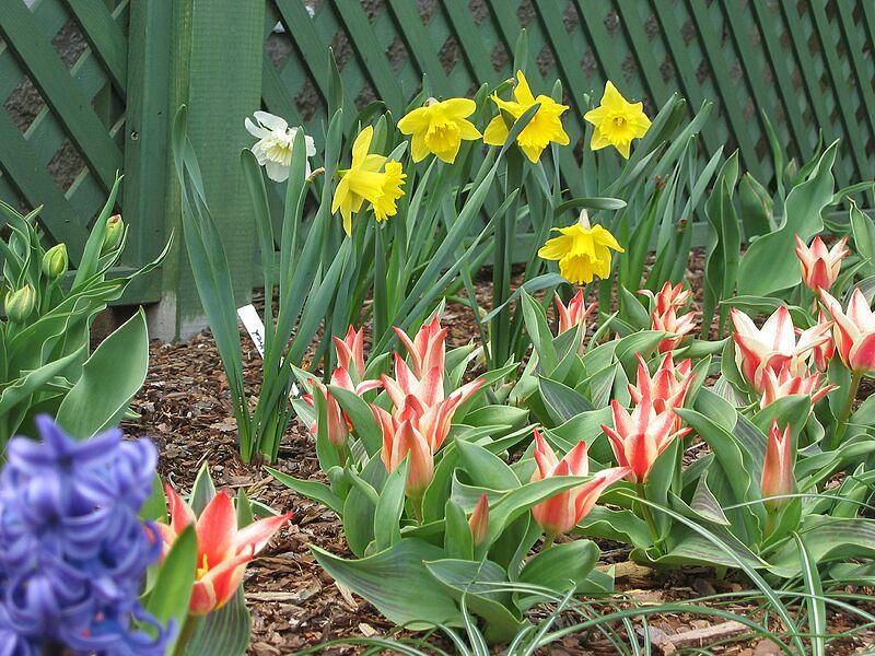 garden-2003-04-0132_std.jpg