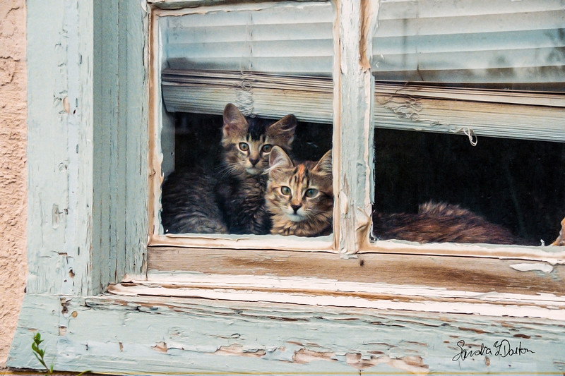 Kittens in Window