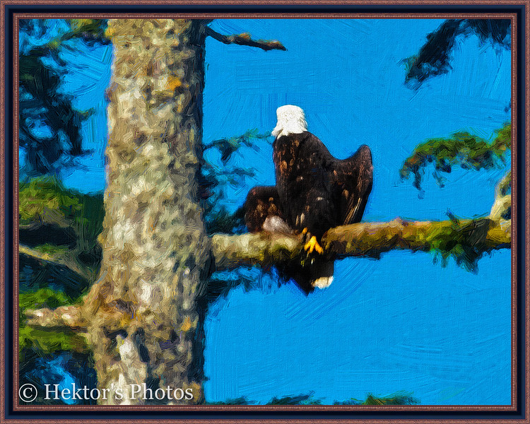 Lighthouse-Eagles-Totems Excursion-2.jpg