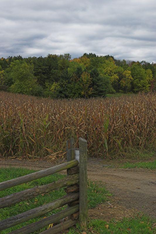 Fencepost, corn, trees