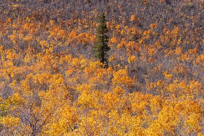 Eastern Sierras Fall Colors 2018