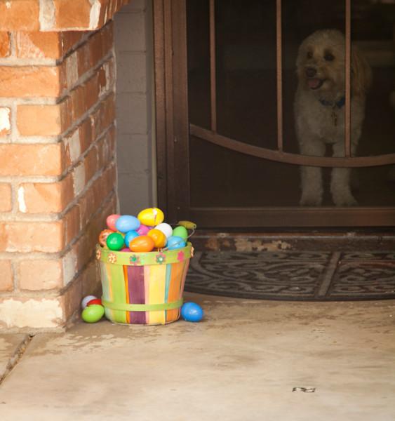 Guard my eggs.jpg